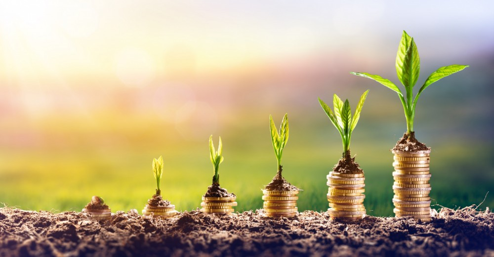 Growing,money, ,plant,on,coins, ,finance,and,investment