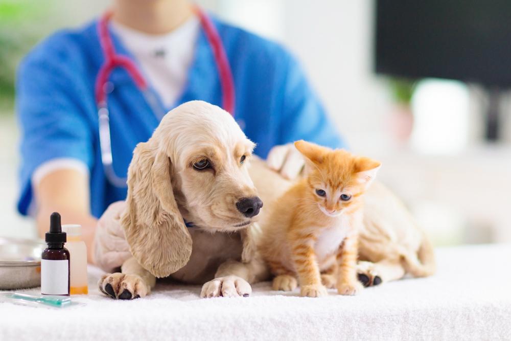 Vet,examining,dog,and,cat.,puppy,and,kitten,at,veterinarian