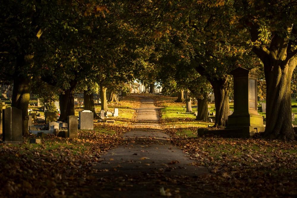 Wilford,hill,cemetery,,nottingham,,nottinghamshire/united,kingdom, ,10/26/2018,:,tree