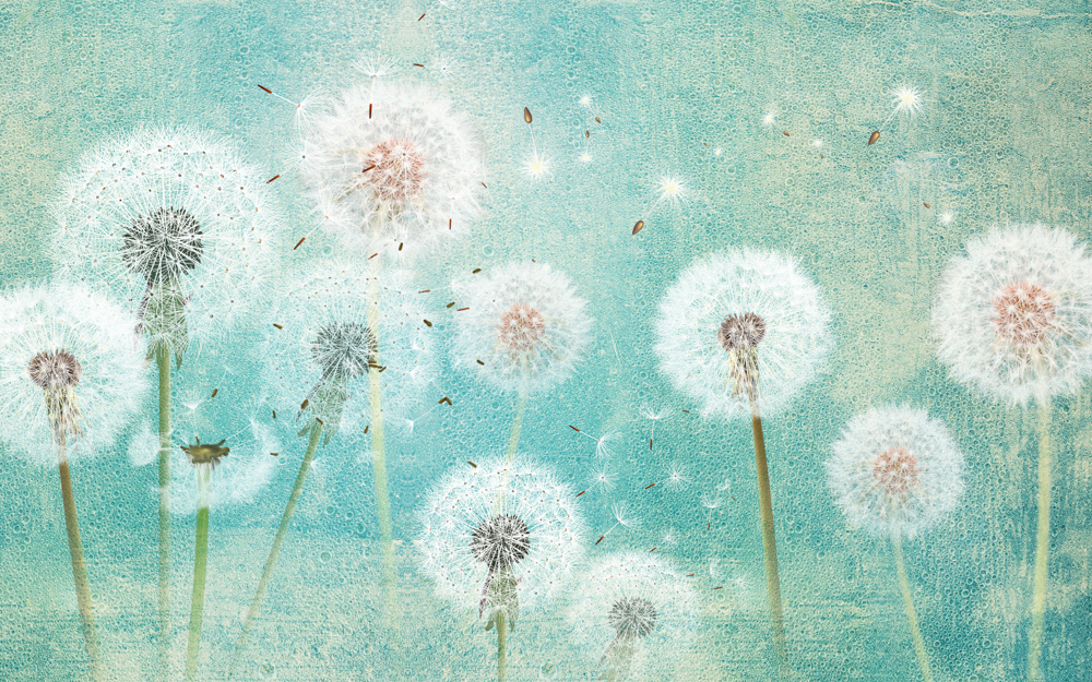 3d,picture,dandelions,on,a,green,background
